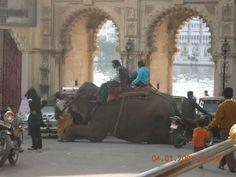 Udaipur Udaipur, To Go, Live, Places, Travel, Viajes, Destinations, Traveling, Trips