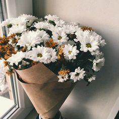 Uploaded by Buket Gülenç. Find images and videos about flowers and daisy on We Heart It - the app to get lost in what you love. No Rain No Flowers, Little Flowers, Beautiful Flowers, Flower Text, My Flower, Apricot Blossom, Hydrangea Bloom, Flower Phone Wallpaper, Flower Graphic