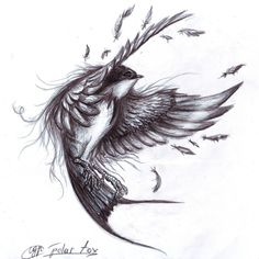 swallow by *SvPolarFox on deviantART