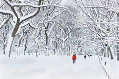Away from the hustle and bustle of the Macy's holiday windows, Manhattan's famed Central Park becomes a winter wonderland under a thick coat of powdery snow.