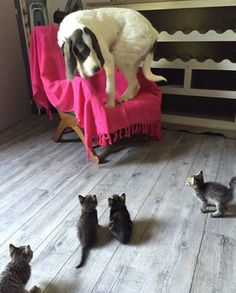 These dogs all have hilarious phobias that'll make you laugh out loud.  Afraid of tiny kitties.