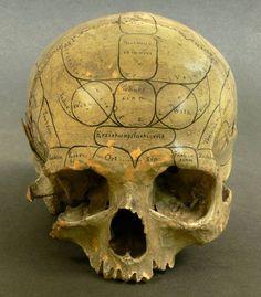 Human skull with phrenological markings, 19th century. Image credit: Eszter Blahak, Semmelweis Museum.