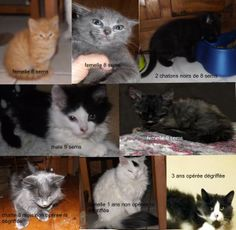 URGENT! Foster homes needed for rescued cats in #Montreal ~ Please visit www.facebook.com/cause4paws <3 Spread far and wide!