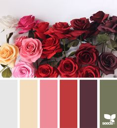 McCoy's Building Supply is your place for interior and exterior paint. www.mccoys.com #painting { paper roses } image via: @apetalunfolds