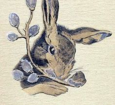 Pussy willow and bunny Rabbit Illustration, Illustration Art, Native American Legends, Solomons Seal, Mother Cat, Willow Branches, Tiny Kitten, Rabbit Art, Honey Bunny