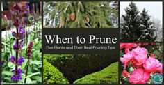 Want to add pruning to your gardening routine? Pruning can be very beneficial for plants, but it takes practice and knowledge in order to do well. Check out our tips for trimming five common plants on our blog: http://eaglesonlandscape.com/when-to-prune/