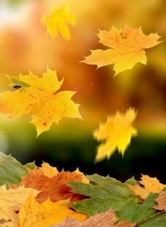 When leaves dance slowly to the ground