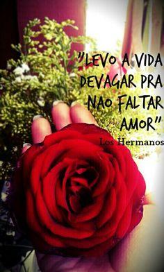#loshermanos #musica #rosa #amor