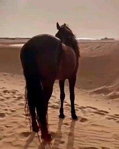 Beautiful Arabian Horses, Majestic Horse, Cute Horses, Horse Love, Beautiful Photos Of Nature, Animals Beautiful, Medieval Horse, Black Horses, Tier Fotos