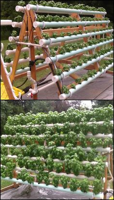 Do you lack the space needed to grow the amount of produce that you want? Think again.  Whether you don't have enough garden area or don't have the space at all, you can still plant a relatively abundant amount of produce with an A-frame hydroponic system!  Do you know anyone who could use an A-frame hydroponic system?