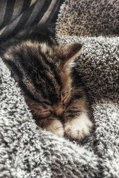 sleeping kitten                                                       …
