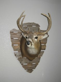 If my deer cape doesn't work for a pedistool, this is how I'm going to mount my deer!