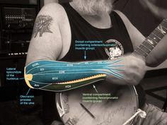 Human Anatomy for the Artist: A Banjo Player's Forearm: Let's Get Lost!