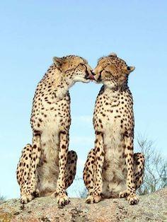 Awwww, kisses...