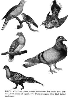 Welcome to Dover Publications: Animals: 1,419 Copyright-Free Illustrations of Mammals, Birds, Fish, Insects, etc.
