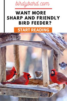 Want to the best and bird friendly bird feeders. Birds are going to come to your bird feeders if it is really a ease one. You may use Diy bird feeder or homemade bird feeder but not will be effective like this. Unique Bird Feeders, Best Bird Feeders, Homemade Bird Feeders, Wild Bird Feeders, Diy Bird Feeder, Pet Feeder, Flock Of Birds, Wild Birds, Small Birds