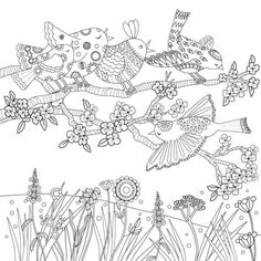 Suzanne Khushi - Coloring Book Singing Birds