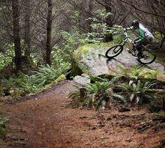 Galbraith Mountain Biking    http://www.fastbikeparts.ch/48-mountainbike-teile-fahrrad-velo-bikes-shop-schweiz