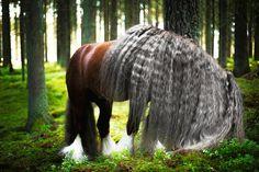 Красивые Лошади, Цыганская Лошадь, Тяжеловозы, Фото С Лошадьми, Лошади, Импрессионизм, Потрясающе, Элегантная Мода, Маленькие Жеребята