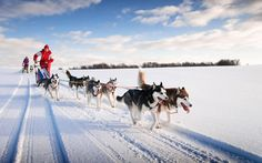 Where To Dog Sled In Finland