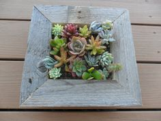 RUSTIC Living Wall Art Kit As Seen In PEOPLE By SucculentsGalore