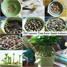 How To Grow A Kiwi From Seed | I Luv DIY