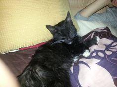 Około 3 miesięczna potrącona koteczka, porażona łapka, potwornie obolała!!! POMOCY!!