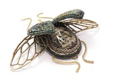 more beaded beetles