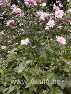 Charlotte, Plants, Stockings, Plant, Planets