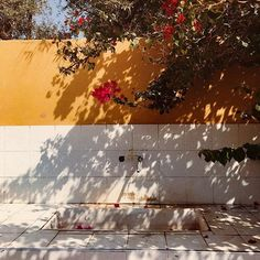 In the language of flowers🥀. Moroccan Interiors, Language Of Flowers, Morocco, Photos, Around The Worlds, Snow, Instagram, Fall, Nature View