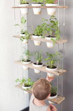 home office plants A DIY plant hanger is an excellent way to bring a fresh herbs into your home. Check out this family friend plant hanger that can be added to any room for fresh herbs and beautiful blooms all year long! Herb Garden In Kitchen, Diy Herb Garden, Kitchen Herbs, Vegetable Garden, Wall Herb Garden Indoor, Herbs Garden, Wall Herb Gardens, Garden Pots, Kitchen Ideas
