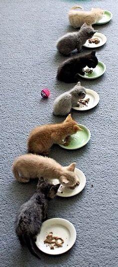 Kittens, Kittens, Kittens . . .