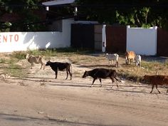 Heavy traffic in front of the house...