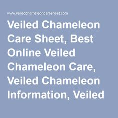 Veiled Chameleon Care Sheet, Best Online Veiled Chameleon Care, Veiled Chameleon…