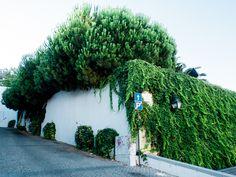 // I can only understand this as territorial dispute // Almada, Portugal // 31 July 2013  // José De Almeida photography // http://www.josedealmeida.com/
