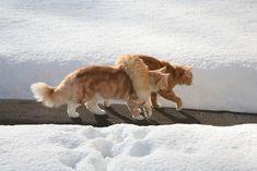 雪とネコ2