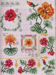 Gallery.ru / Фото #67 - Ботаника-цветы - irislena NASTURZIO 2