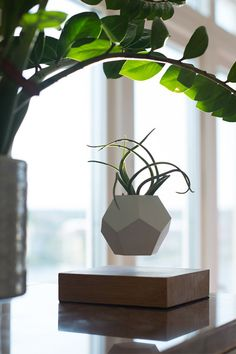 A new product from the future has landed in our hands, the Levitating Flower Pot is now available in our store. Ceramic Planters, Planter Pots, Boho Lighting, Lighting Ideas, Spring Air, Mid Century Modern Lighting, Ceramic Light, Bohemian Design, Son Luna