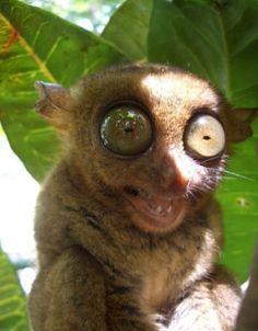 ugly babies with big eyes - photo #18
