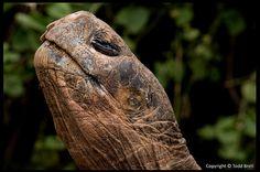 Galapagos Tortoise | Flickr - Photo Sharing!