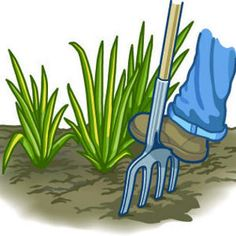 Divide Iris in heat of summer when dormant - July thru Sep. Recommended to divide every 3 to 4 years whether crowded or not. Use a spading fork instead of a shovel because it is less likely to cut roots and rhizomes.