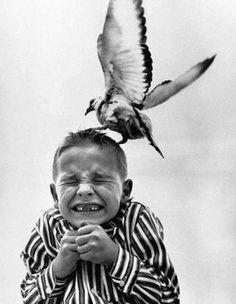 Annoying Birds : Ooodd