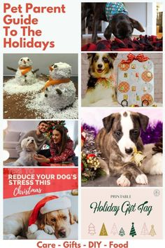 I teamed up with 6 other bloggers to bring you the ULTIMATE pet parent guide to have happy holidays. This is a group of fantasitc pet bloggers, including a vet and a designer, to give you pet parent Holiday preparation and survival tips for this Holiday season. From cute, printable gift tags to paw-fect puppy presents, and essential dog care tips to delicious dog Christmas cake. #christmaspetsaftey #christmasdog #christmaspuppy #christmasdogs #thanksgivingdogs Pet Care Tips, Dog Care, Christmas Dog, Christmas Projects, Merry Christmas, Dog Enrichment, Tattoos For Dog Lovers, Dog Mom Gifts, Dog Id
