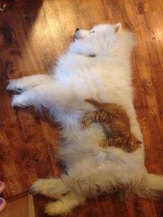 Gato e cachorro !