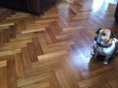 Here we have an irresistible Jack Russell on an equally appealing Walnut floor, photos as provided by our kind clients.