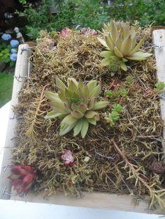 Building a Green Roof Bird House - That Bloomin' Garden Diy Garden Projects, Garden Crafts, Diy Garden Decor, Diy Crafts, Wooden Bird Houses, Bird Houses Diy, Quick Garden, Roofing Options, Alfresco Area