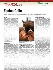 The Horse | Colic in Horses | TheHorse.com