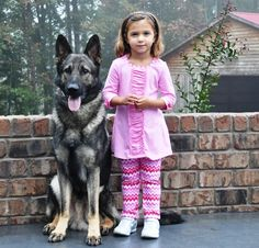 Which Dogs Are Good With Kids? Family Trained German Shepherds.