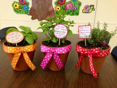 Parent volunteer appreciation gifts. These are basil, mint, and thyme. :)  For my garden docents!!
