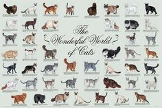 Cat Breeds And Information - d2jsp Topic